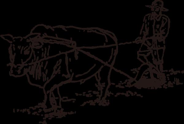 牛人犁地耕地男性