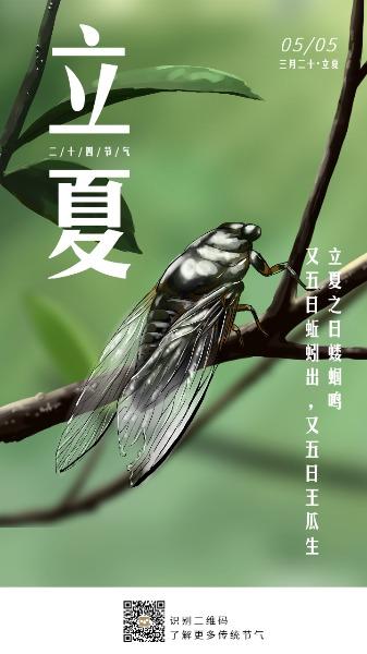 传统文化24节气立夏蝉树叶手绘海报设计模板素材