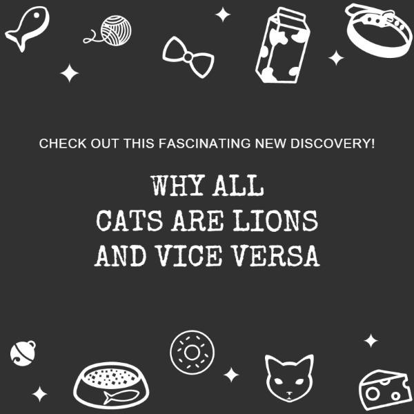 黑色卡通插画宠物主题海报