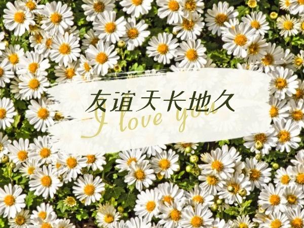 绿色小清新友谊雏菊