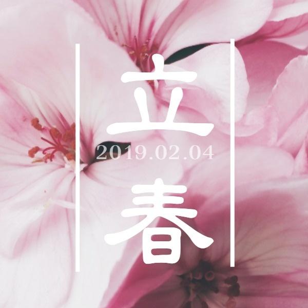 粉色桃花立春