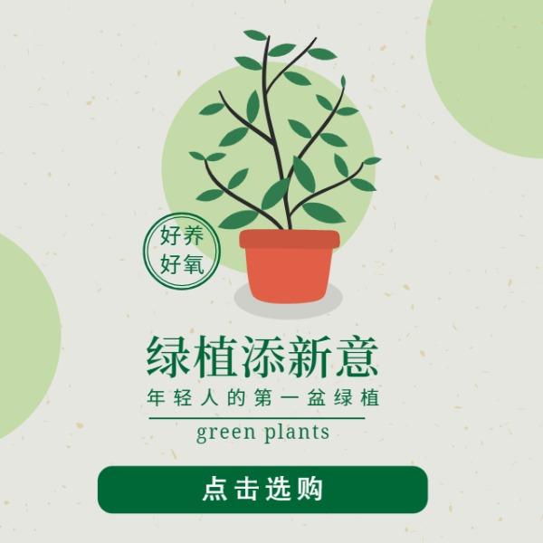 家居植物绿植宣传