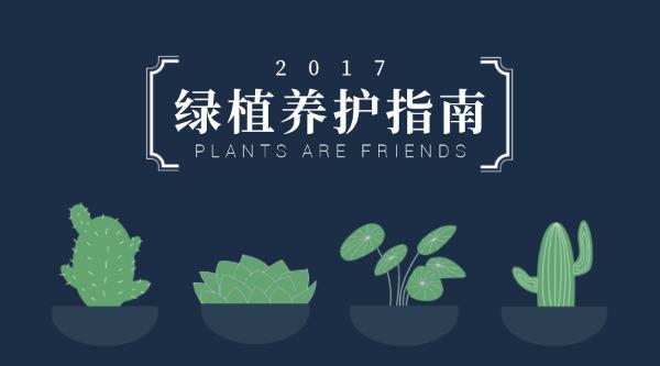 绿植养护指南
