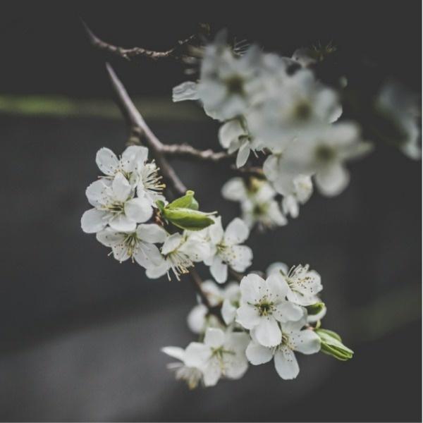 白色花朵寻春矢量图