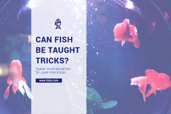 教小金鱼一些技巧