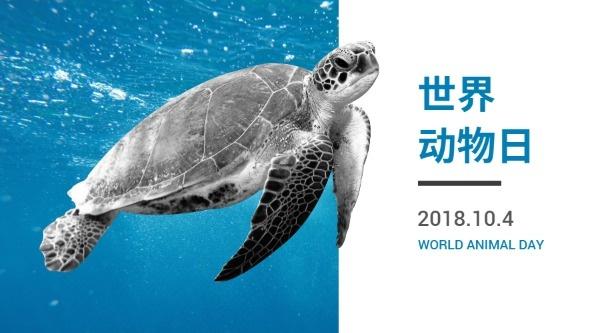 世界动物日乌龟