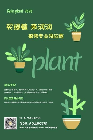 绿植植物盆景