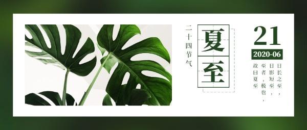 二十四节气夏至简约植物