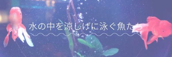 紫色金鱼主题封面