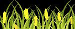 麦田麦穗植物农作物绿植