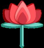 荷花鲜花花朵花花卉