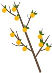 树大树橘子树植物果树