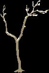 树树枝植物树木自然