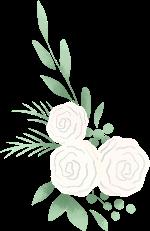 花花朵鲜花花卉白玫瑰