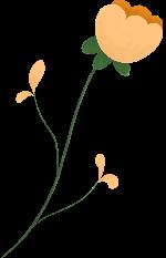花小花花朵花卉植物