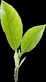 树叶叶子绿叶嫩叶植物