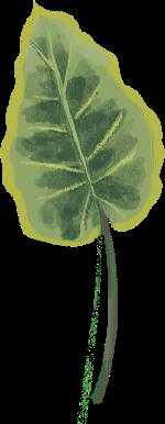 樹葉植物葉子綠葉裝飾