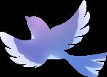 喜鹊动物鸟飞鸟鸟类