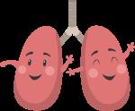 器官肺部肺卡通肺部微笑