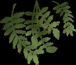 叶子树叶绿叶植物绿植