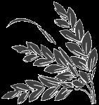 叶子树叶草植物绿植