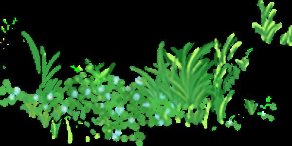草地植物树叶叶子绿叶