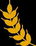 小麦麦子麦穗植物叶子