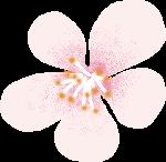 鲜花花朵花卉植物花