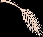 小麦麦子麦穗粮食农作物