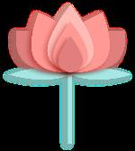 荷花花花朵花卉植物