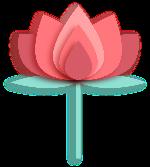 荷花鲜花花朵花莲花