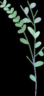 叶子树叶绿叶枝叶植物