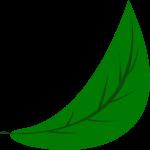 叶子树叶植物绿植装饰