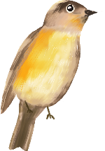 小鸟麻雀鸟飞鸟鸟类