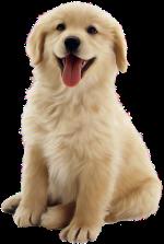 狗米黄色动物宠物