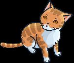 小猫花猫橘猫喵猫