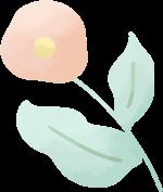 花花朵花卉鲜花植物