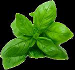 叶子绿叶叶片树叶植物