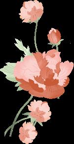 花朵花卉鲜花植物叶子