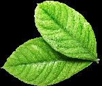 叶子树叶植物绿植绿叶