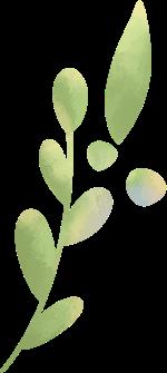 叶叶子树叶枝叶植物