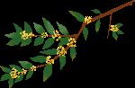 桂花桂花枝树枝植物中秋