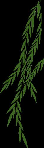 树枝树叶叶子绿叶植物