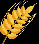 麦穗小麦装饰装饰元素手绘