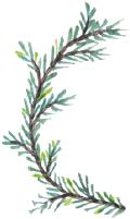 树枝树叶叶子植物松枝
