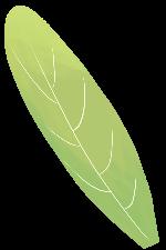 绿叶叶子植物绿植树叶