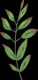 樹葉葉子植物綠葉裝飾