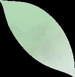 叶叶子树叶绿叶叶片