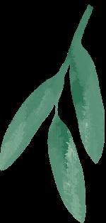 树枝树叶绿叶植物绿植
