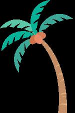 树树木植物椰子树装饰